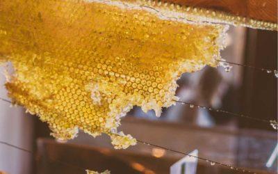 Bienfaits du miel (recettes beauté et cuisine)
